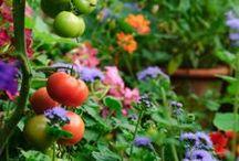 Wannabe-Gardener: Edible