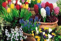 Wannabe-Gardener: Flowers & Plants