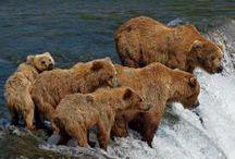 Bear, Elk & Moose / by Lesli