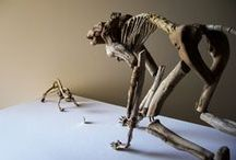 """Fragile Skeletons / """"Fragile Skeletons"""" by Giovanni Longo is a series of sculptures realized with the wood recovered on the beach (driftwood), creating a fragile bond between the osseous and the ligneous elements... https://www.facebook.com/giovannilongo.art"""