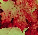 Automne / Quelques vidéos thématiques sur l'automne