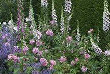 Garden***Garten / by Trullala