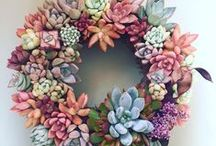 Succulent / Sukulent
