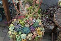 I wish Yard / by Melinda Gutierrez