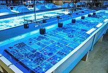 Coral Farming / Coral farms around the world