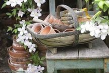 Tuin / Garden / by Iris