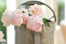 Bloemen / Flowers / by Iris