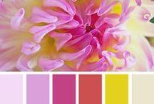 Палитра / Сочетание цвета