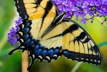 Pretty Papillons / ~*❀* Butterflies *❀*~