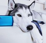 ANIMALS / ÖGON DESIGNS - Smart Wallets  / We love animals