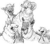 Animal Design: Goats   Sheeps
