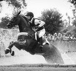 Photography: Horses   XC