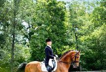 Photography: Horses   Dressage