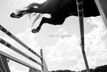 Photography: Horses   Jumping