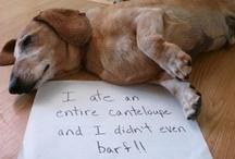 Funny Pet Confessions