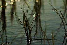 Serenity ( 2 )