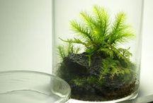 Moss Terrarium / 道草デザインの苔テラリウム「小さなコケの森」
