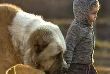 Pets / Animals are such agreeable friends - they ask no questions; they pass no criticisms.