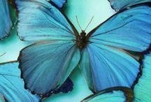 Butterfly ♡