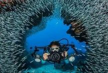 Scuba Diving / The ocean is a beautiful place! You never know what you will see