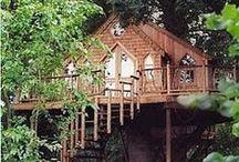 Tree House / Tree House