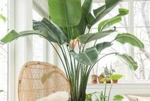 Indoor House Plants & Flowers