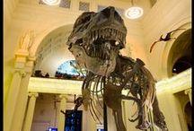 Dinosaurs / by Joyce Dowtin