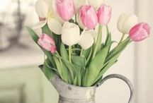Spring / Everything you need to clear out the cobwebs and bring in the spring flowers or your Easter celebration.