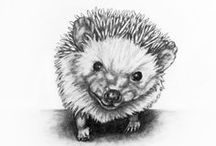Pencil Drawings / Pencil Animal Drawings by Rachelle Dyer.