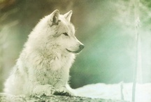 Animals and Wilderness