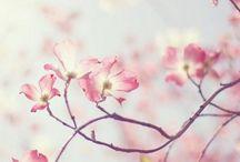 flowers / by ICOCA