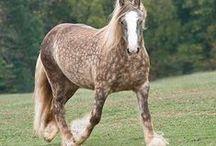 Erikoiset värit ja merkit hevosilla