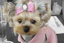 pulover ,accesorios perritos