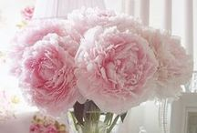 Peonies / My number 1 favourite flower - I plant more every year.