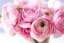 Ranunculus / Ranunculus might just be my favourite flower - the tissue paper petals and perfect colours are irresistible!