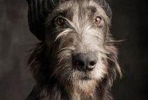 Dog love / #dogs, #animals, #bestfriend, #doglove, #paws, #friends