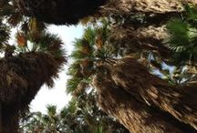 Palm Springs and Beyond! / Our Top 10 recommendations - favorite activities, where to spa, dine & stay in the Palm Springs to La Quinta area.  Find out at:  http://www.GlobalAdventuress.com