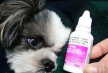 他にもこんなくすりがあります。 / フィラリア・ノミマダニ予防薬だけでなく、色々なお薬を取り扱っています!http://www.petkusuri.com/