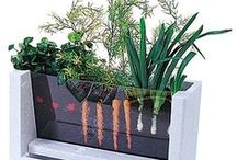 Garden&Plants