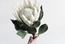 Floristy / FLORYSTYKA / by Danuta Nikiel
