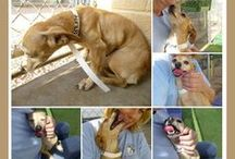 !!!Animals~Protect Man/Woman's Best Friend!!!