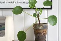 Zimmerpflanzen / Hier findet Ihr jede Menge Ideen & Inspiration, wie ihr eure Wohnung mit grünen Mitbewohnern noch schöner machen könnt!