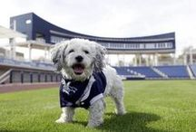 Something Exciting is Brewing! / Our favorite MLB team, Milwaukee Brewers