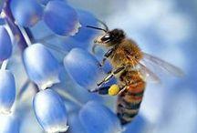 Bienen / Bienen lieben Blumen und sind immer auf der Suche nach Nektar. Welche Pflanze sie besonders gerne haben seht ihr hier
