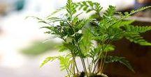 Kokedama / Kreative und absolute Hingucker: Kokedamas sind kleine Bälle aus Moos, in denen Pflanzen ein zuhause finden!