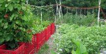 Urban Gardening / Gärtnern mitten in der Stadt! Auf brachliegenden Flächen, Baumscheiben oder am Laternenmast. Hier findest du kreative Urban Gardening Ideen.