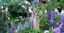 Bauerngarten / Romantische Bauerngarten-Feeling pur! Bunte Blumen, Gemüse und gemütliche Sitzmöglichkeiten - all das gehört zu einem Bauerngarten.