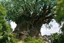 "Disney's Animal Kingdom / All the tips you need to know to enjoy Walt Disney World's Animal Kingdom to the fullest: the attractions, food, restaurants, characters and ""Meet & Greets"", parades, shows, special events, and so much more!"