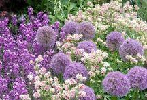 Flores, flores, jardins e afins...