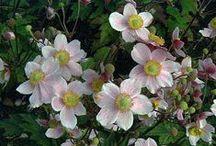 Front garden border ideas / Ideas for a flowering shrub border